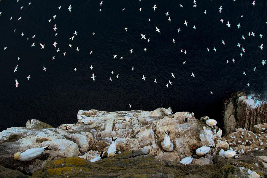 british wildlife photography awards 2015 Barrie Williams
