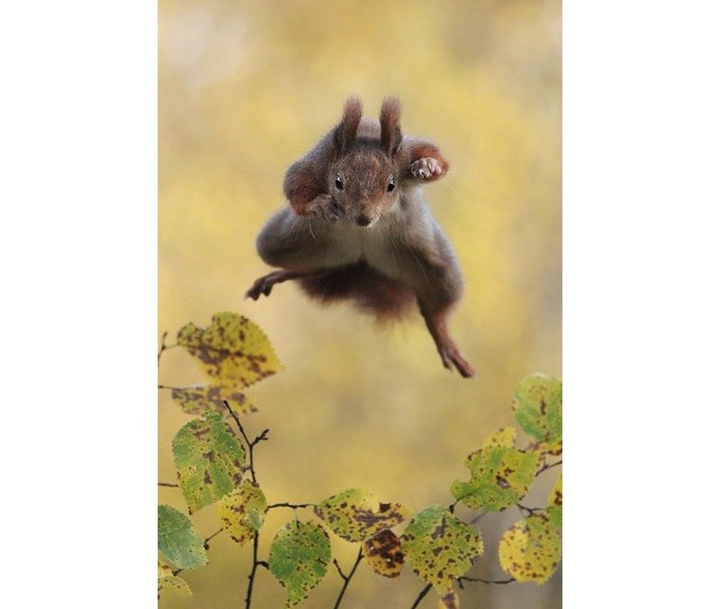 squirrel.0